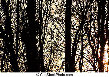 silhouette of trees in sunset, photo as a background