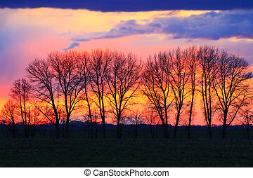 Silhouette of trees in the spring sunset