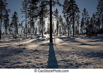 Silhouette of trees