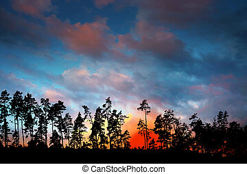 Silhouette of trees on dramatic sunset