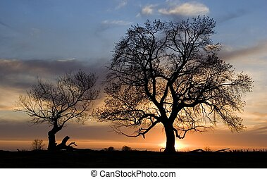silhouette of 2 trees at sunset in spring