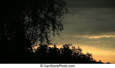 Silhouette of trees swaying