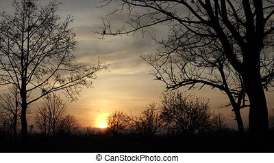 Silhouette of trees sways in the wind at sunset