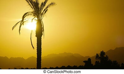 Silhouette of Tropical Palm Tree at Sunset, Time Lapse