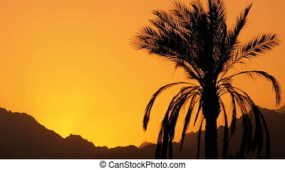 Silhouette of Tropical Palm Tree at Sunset