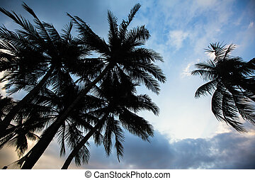 Silhouette of tropical palm trees against a blue sky.