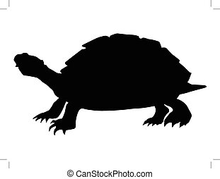 turtle - silhouette of turtle