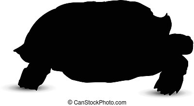 Silhouette of turtle.