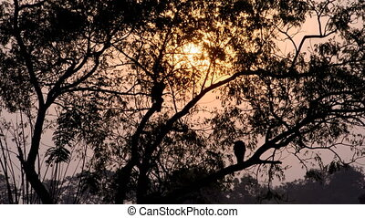 Silhouette of two openbill stork birds on a tree