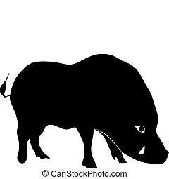silhouette of wild boar