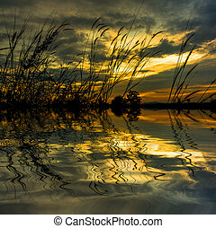 silhouette of wild grass at sunset