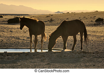 Silhouette of Wild horses of the Namib drinking