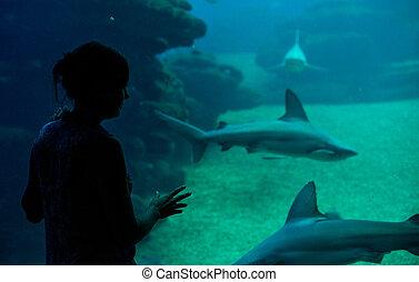 Silhouette of woman in the aquarium.