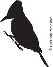 woodpecker - silhouette of woodpecker