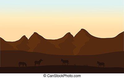 Silhouette of zebra in desert