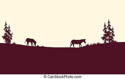 Silhouette of zebra in fields