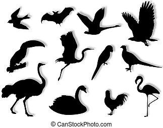 silhouette, oiseaux