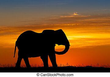 silhouette, ondergaande zon , elefant