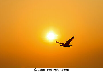 silhouette, ondergaande zon , vogel