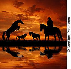 silhouette, paarde, cowboy