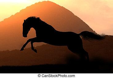 silhouette, paarde, ondergaande zon