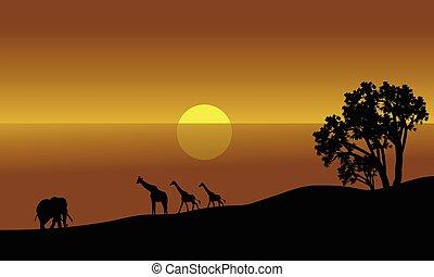 silhouette, paesaggio, illustrazione, africano
