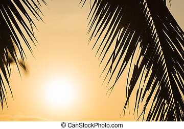 Silhouette palm leaf with golden sunset background