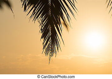 Silhouette palm leaves with golden sunset background