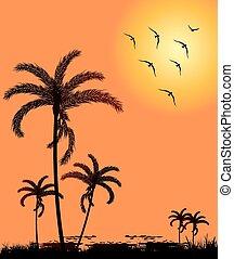 silhouette, palm, ondergaande zon , bomen