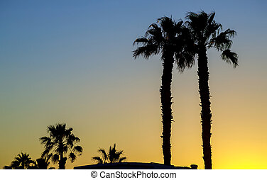 Silhouette palm trees at against the sky during a sunset.