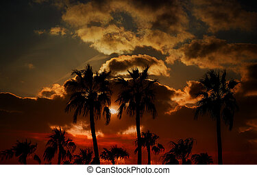 Silhouette palm trees on sunset