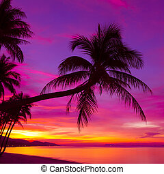 silhouette, palmboom, ondergaande zon