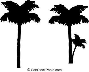 silhouette, palmier