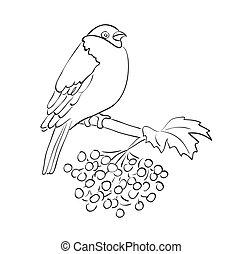silhouette, passero, sedere, -, vettore, rowan, ramo, uccello