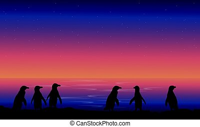 Silhouette penguin at night landscape