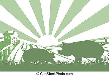 Silhouette pigs on farm