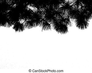 silhouette pine leaves isolated on white background.