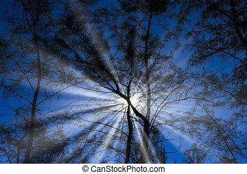 Silhouette pine tree with blue sky