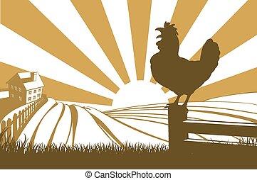 silhouette, pollo, crowing, gallo