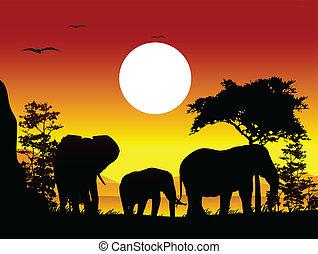 silhouette, reise, schoenheit, elefant