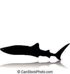 silhouette requin