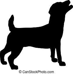 silhouette, russel, terrier, dommekracht