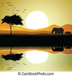 silhouette, safari, éléphant