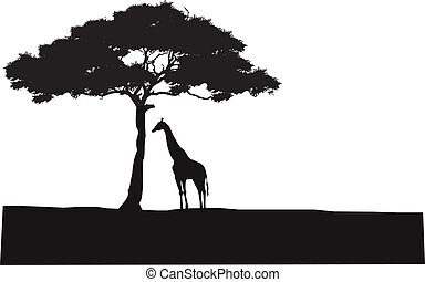silhouette, safari, hintergrund