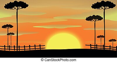 Silhouette scene with tall trees at sunset
