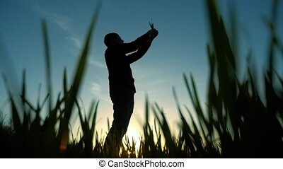 silhouette scientist of man farmer in field with grass...