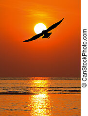 silhouette seagull flying to the sun at dusk