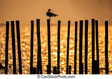 Silhouette Seagull sitting