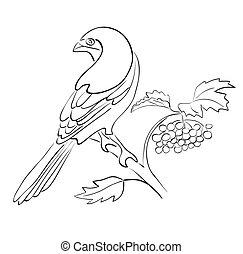 silhouette, sedere, -, vettore, rowan, ramo, uccello