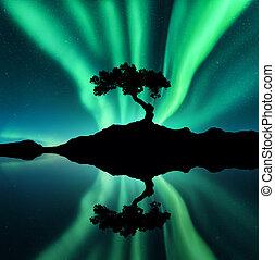 silhouette, settentrionale, luci albero, verde, roccia
